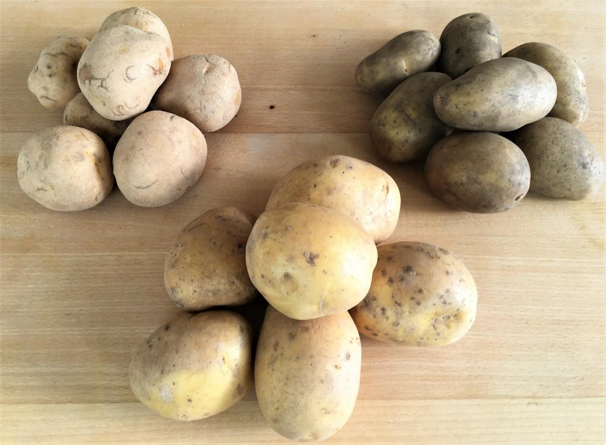 Sortenvielfalt = Geschmacksvielfalt